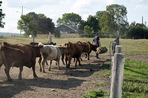 projet ferme agricole